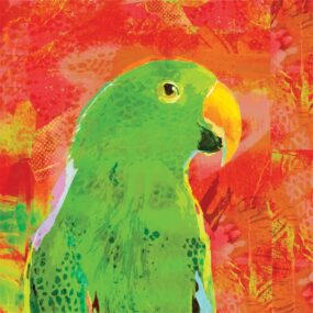 CUSHION-Orange-Eclectus