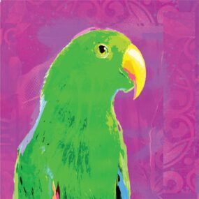 CUSHION-Purple-Eclectus