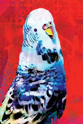 GC01 Greeting Card Red Budgie