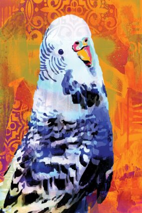 GC02 Greeting Card Orange Budgie