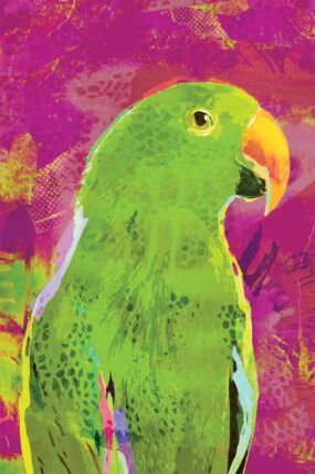 GC03 Greeting Card Purple Eclectus