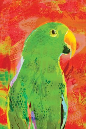 GC04 Greeting Card Orange Eclectus