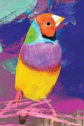 GC05 Greeting Card Gouldian Finch
