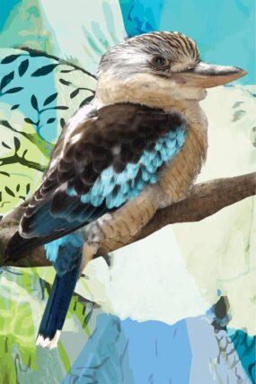 GC08 Kookaburra