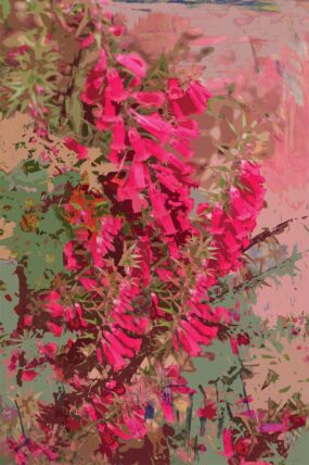 GC14 Greeting Card Pink Heath 1