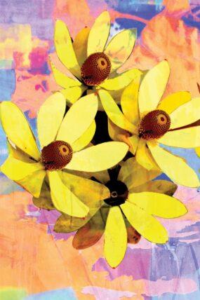 GC16 Greeting Card Yellow Protea