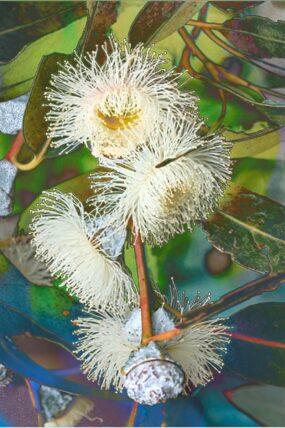 Towel-Blue-Gum-Eucalyptus