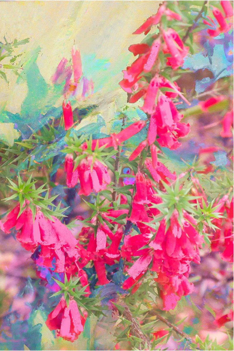 Greeting Card Pink Heath 2 Ke Design Gift Home