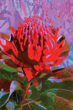 TRAVEL TOWEL WARATAH