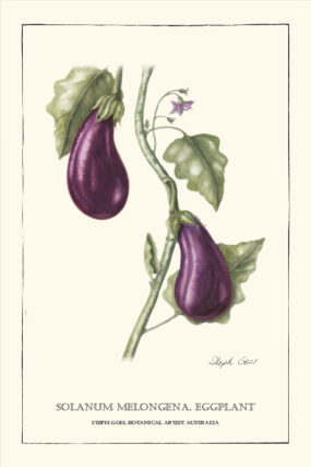 TEA TOWEL - EGGPLANT